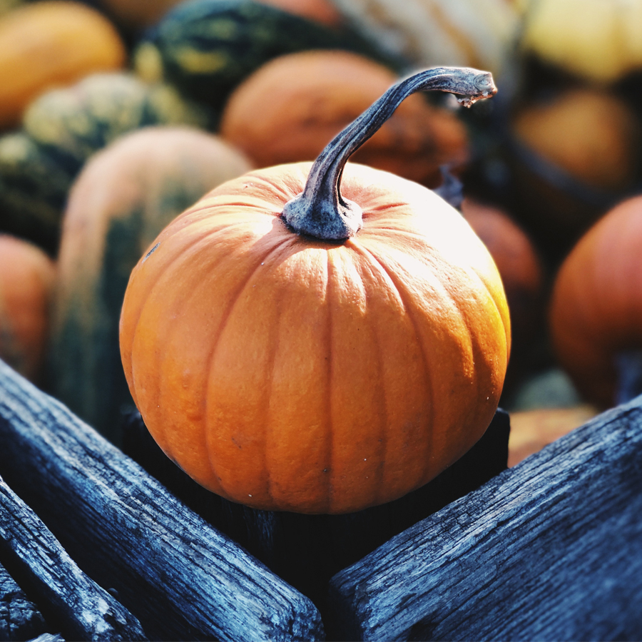 5 Flavorful Fall Festivals