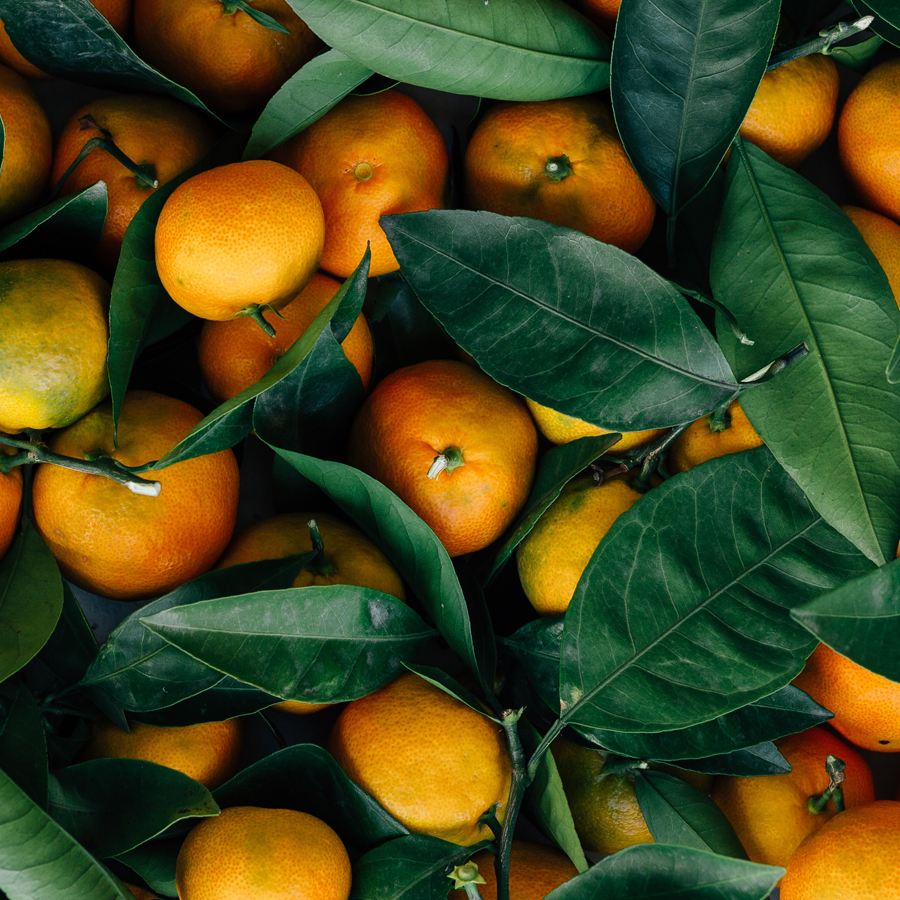 Wintry Ways to Enjoy Citrus Season