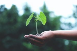 Spotlighting Sustainability to Celebrate Earth Day 2021